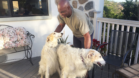 Photo of black Vista resident walking his dogs makes him burglary suspect