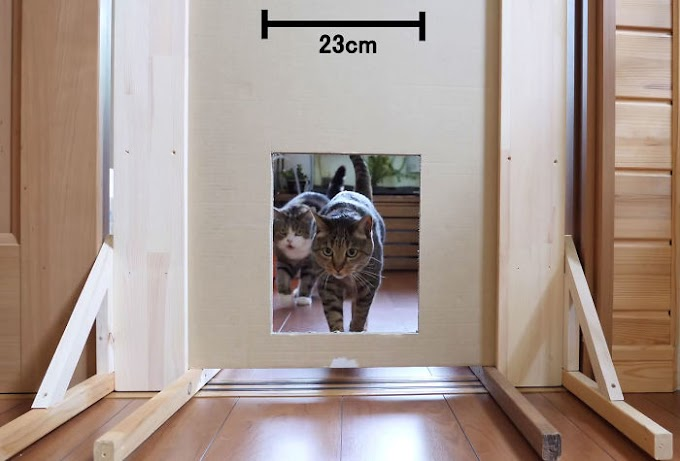 Somebody Tests however slim a niche Cats will match Through And It's uproarious