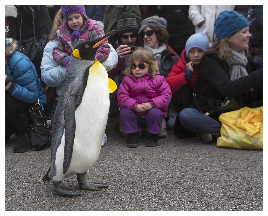 Penguin Parade 5