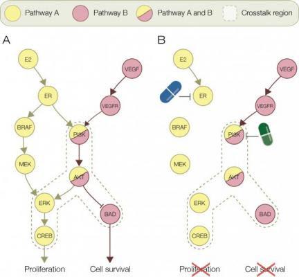 bioinformatica ident