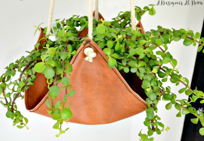 elephant-bush-plant-in-handmade-leather-hanging-planter
