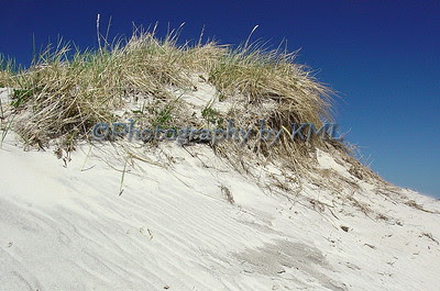 sand dunes with grass in the spring