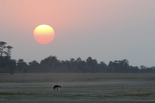 Amboseli Sunset by Megan Lorenz