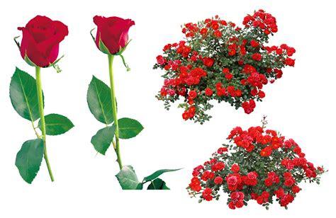 red rose clipart bunga mawar