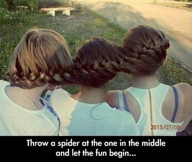 Throw A Spider In The Middle And Let The Fun Begin Picture Quotes