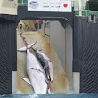 Demand Japan Stop Whaling - The Petition Site