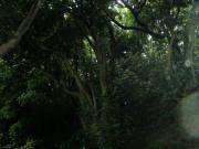20080608猿島-41