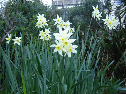 Almost Spring Garden 3