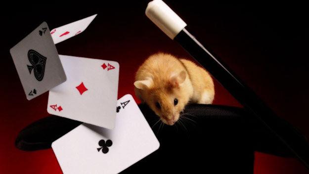 Magic trick supplies