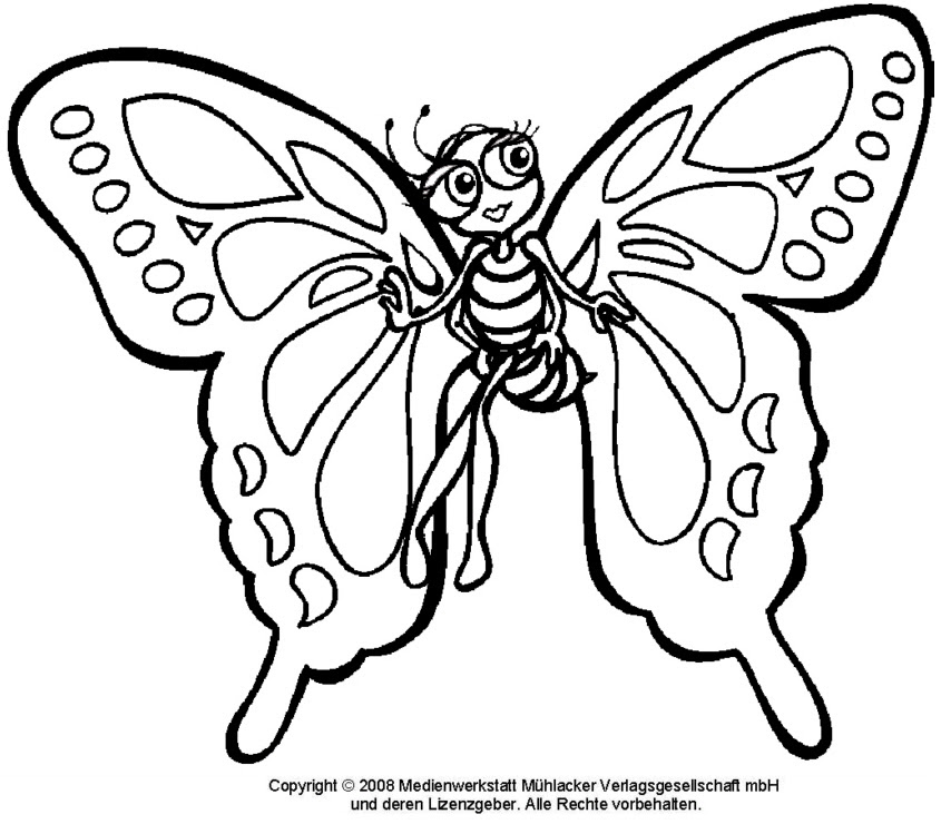 Schmetterling 1 - Medienwerkstatt-Wissen © 2006-2017 ...