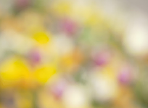 Blurred Flowers #1