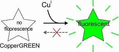 CopperGREEN: A Fluorogenic Compound for the Specific Detection of Copper(I) Ions in Living Cells