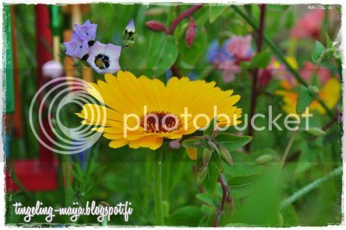 photo DSC_1018crop.jpg