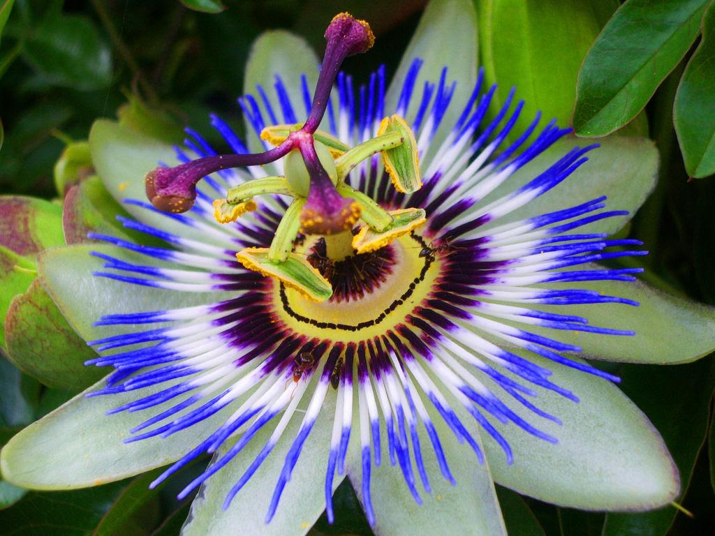 25 Fotografias de plantas para os amantes da matemática 23