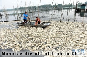 Fish kill in China