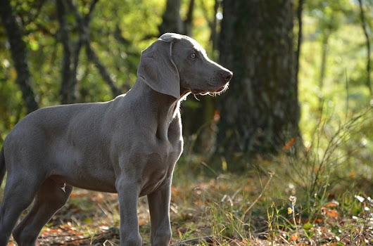 Alabama Rot in the UK: What You Need to Know