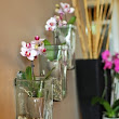Orchids Can Create a Dazzling Home Décor
