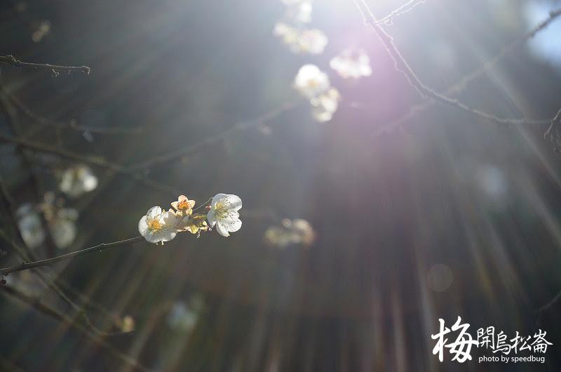梅開烏松崙  (24).jpg