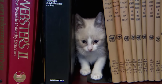 A cat library in New Mexico encourages office workers to check out kittens