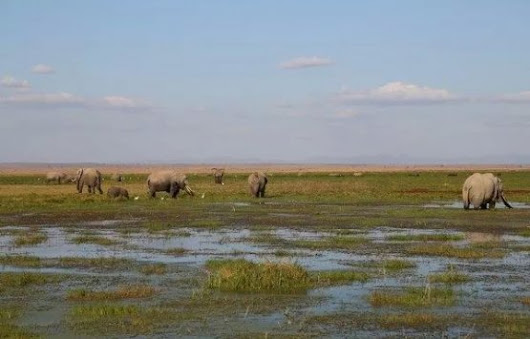 3 Days/2 Nights Amboseli Safari, Kenya | Synotrip