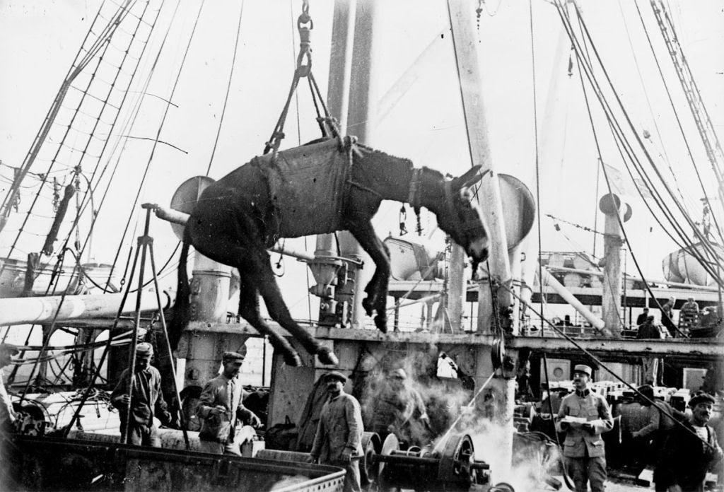 Os animais também lutaram na Primeira Guerra Mundial 06