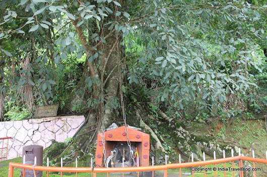 Chain Tree, Wayanad - History | Attractions in Wayanad