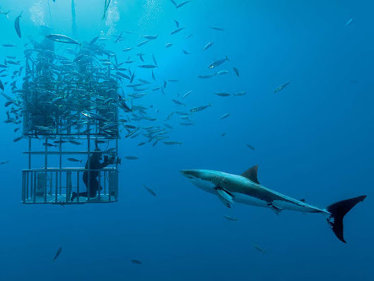 10 Once-in-a-Lifetime Scuba Diving Trips