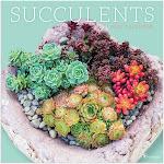 TF Publishing 2020 Succulents Wall Calendar