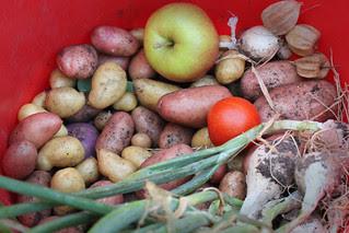 Harvest trug