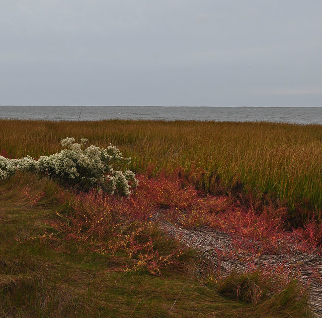 Metompkin Bay (7)