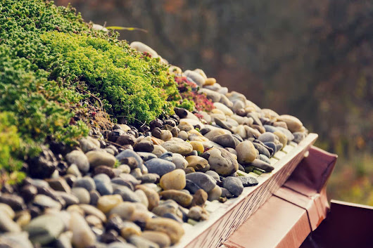 Green Roof - The Perfect Roof Garden Ideas