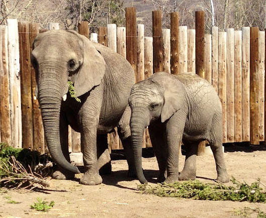 Elephants rarely get cancer, now scientists think they know why