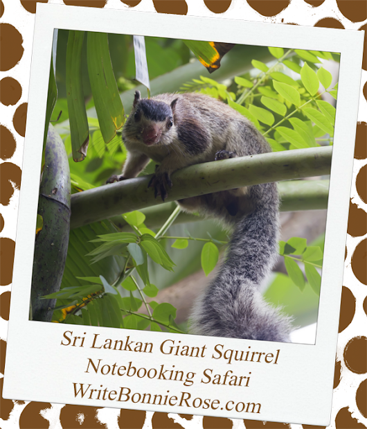 Notebooking Safari Sri Lanka and the Giant Squirrel - WriteBonnieRose.com