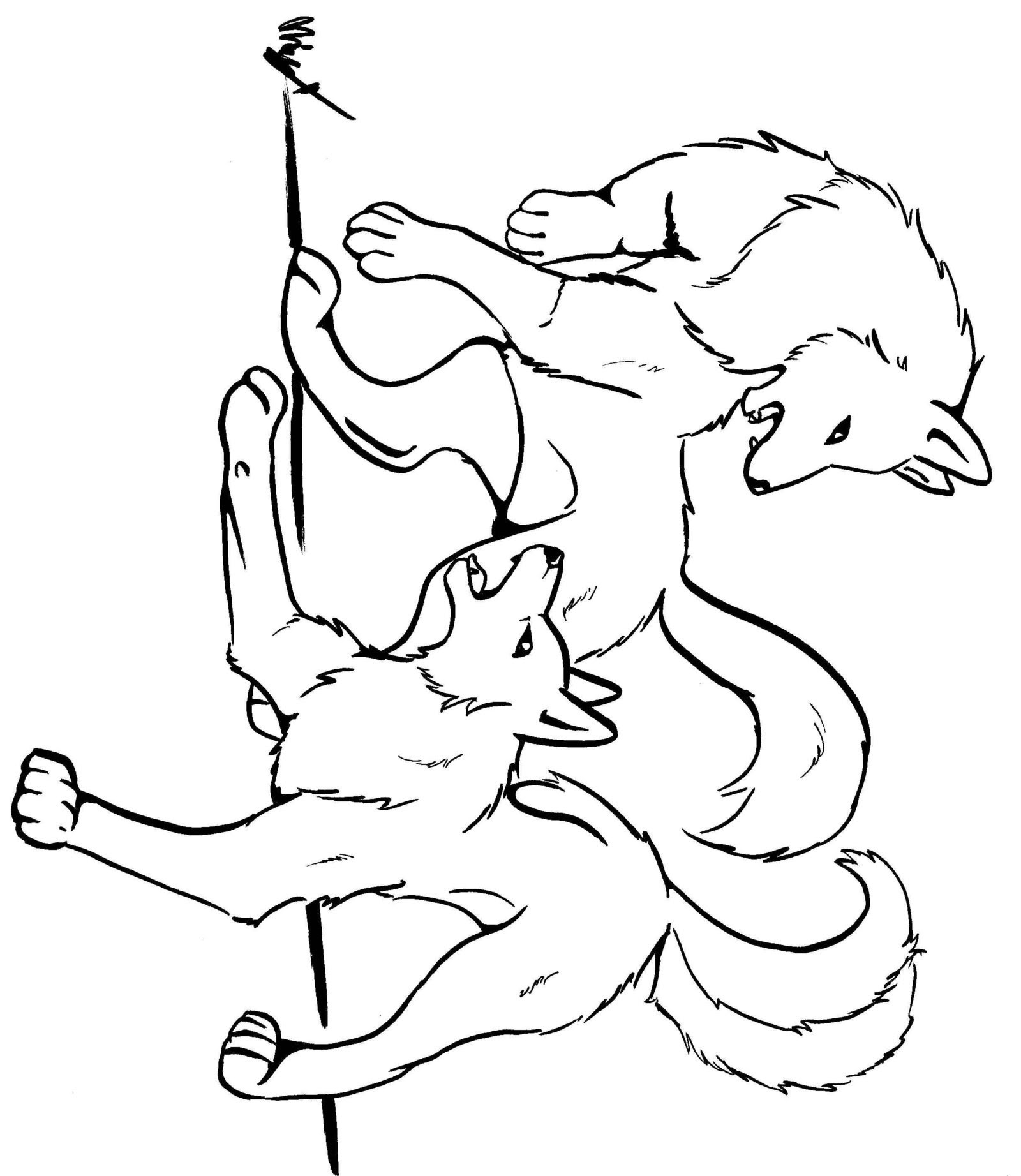 Fighting Wolves Drawing at GetDrawings | Free download