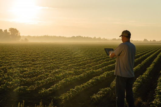 New dawn for Farm Tech: Internet of Things pacts sow future data crop