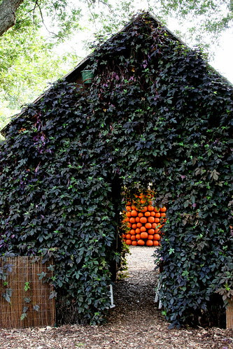 sweet potato vine house