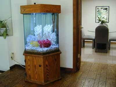 gallon hexagon marine fish tank aquarium design
