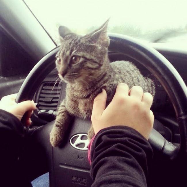Открытия, которые вам «грозят», если вы заведете кота))
