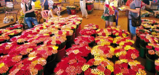 Flower Markets and Barong Traditional Dance