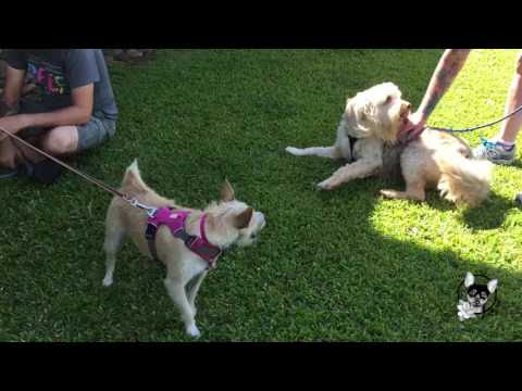 Socialization with Lucy & Yoshi: Video of the Day