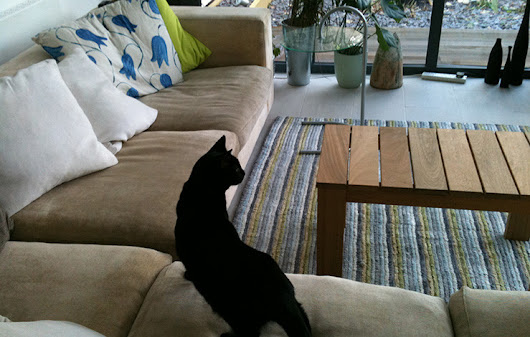Upholstery Sofa Cleaning London | Leather Cleaner » Remove cat's urine odour