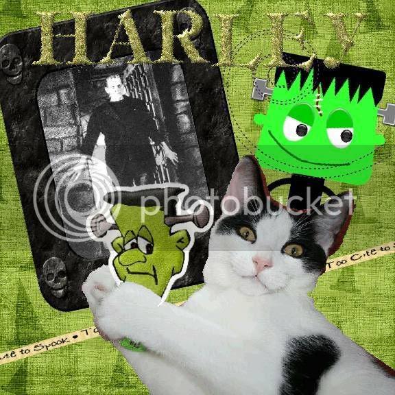 Howl-N-Scream,Domestic Cat
