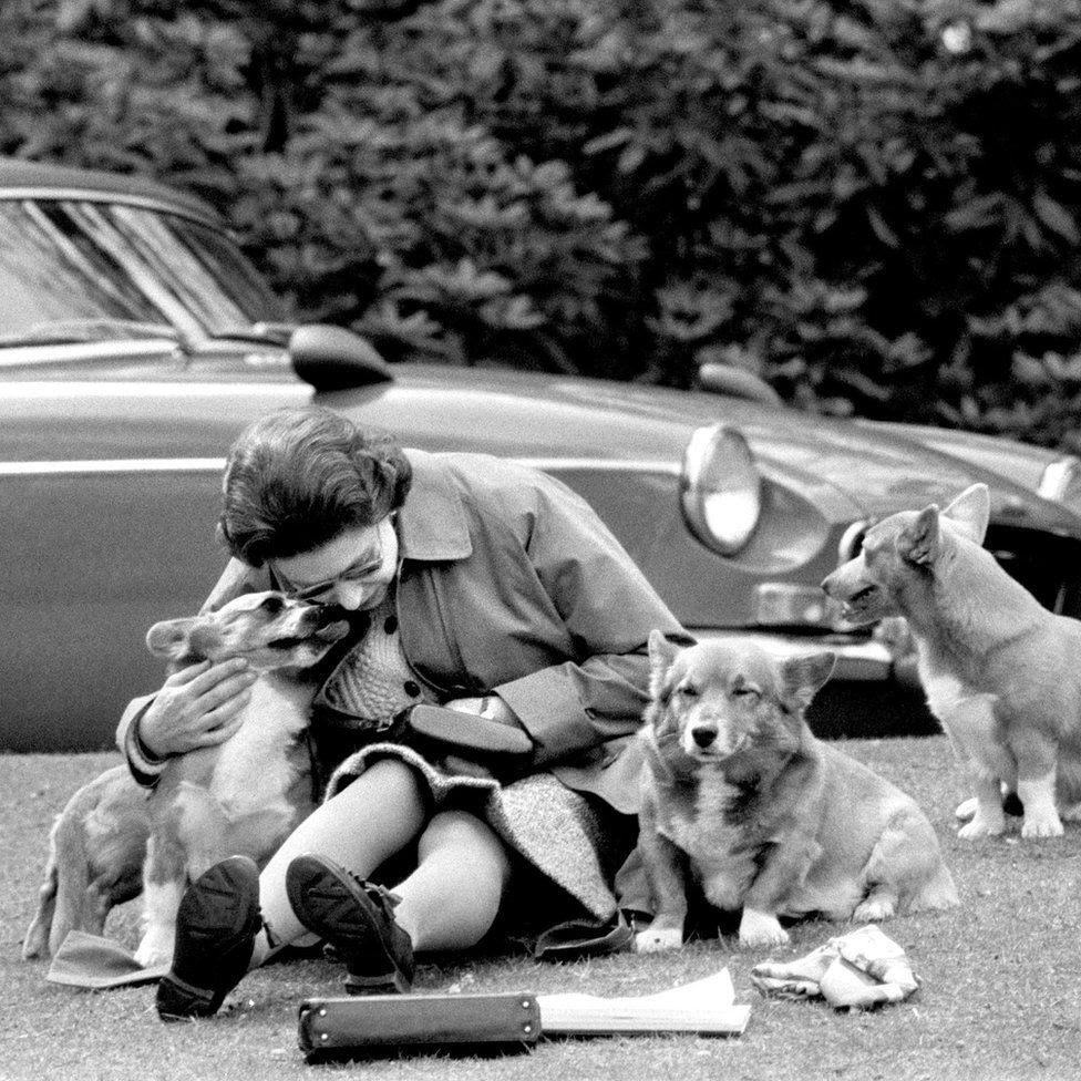 With her corgis