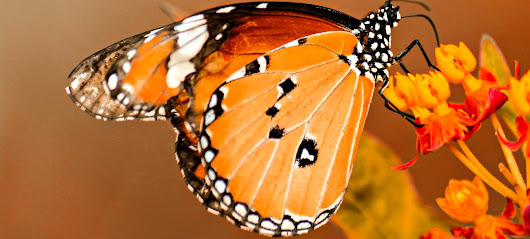 The Butterfly Effect: Handling Rejection as a Christian