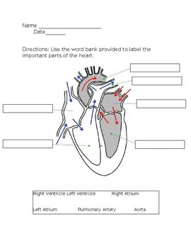 31 Label The Parts Of The Heart Worksheet - Labels ...