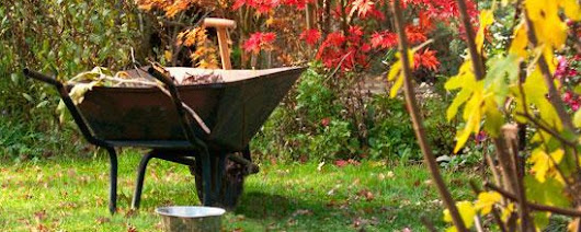 Clean Up Your Garden for Colder Months