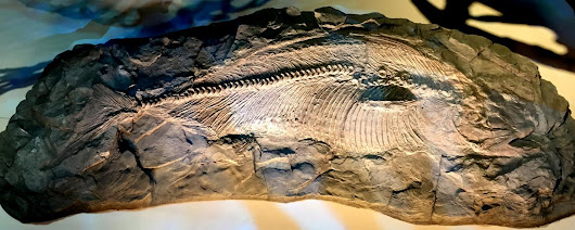 Texas fish of dinosaur era found to be new species
