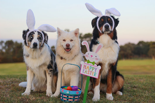 Our top 5 best stories for Easter Monday | Toronto Storeys