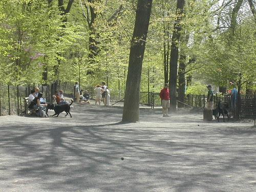 Riverside Park/ Dog Run