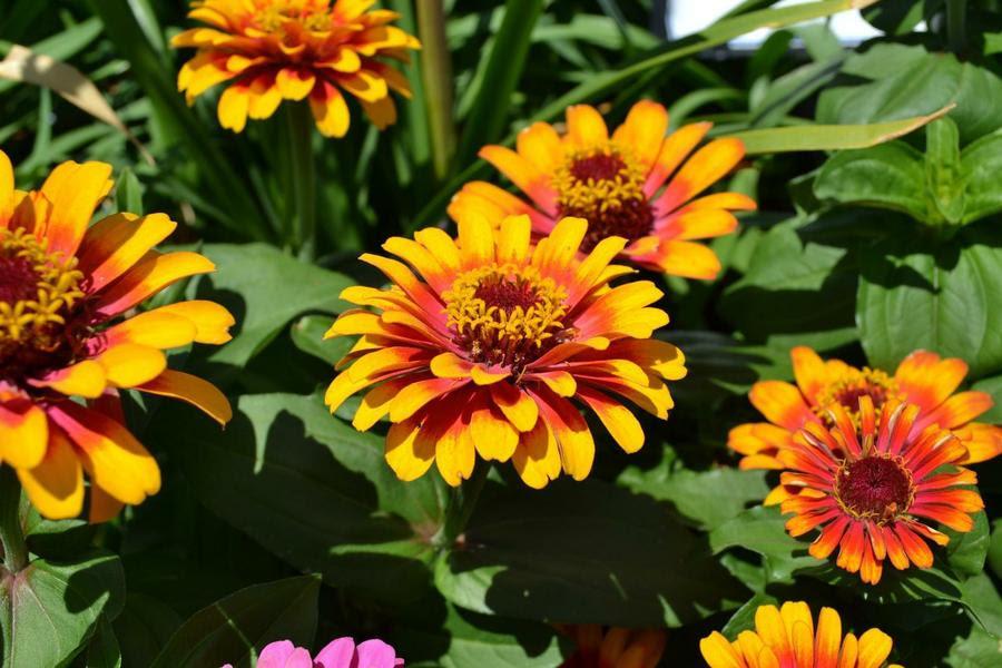Plantas Herbacea Nombres Facilisimo Com